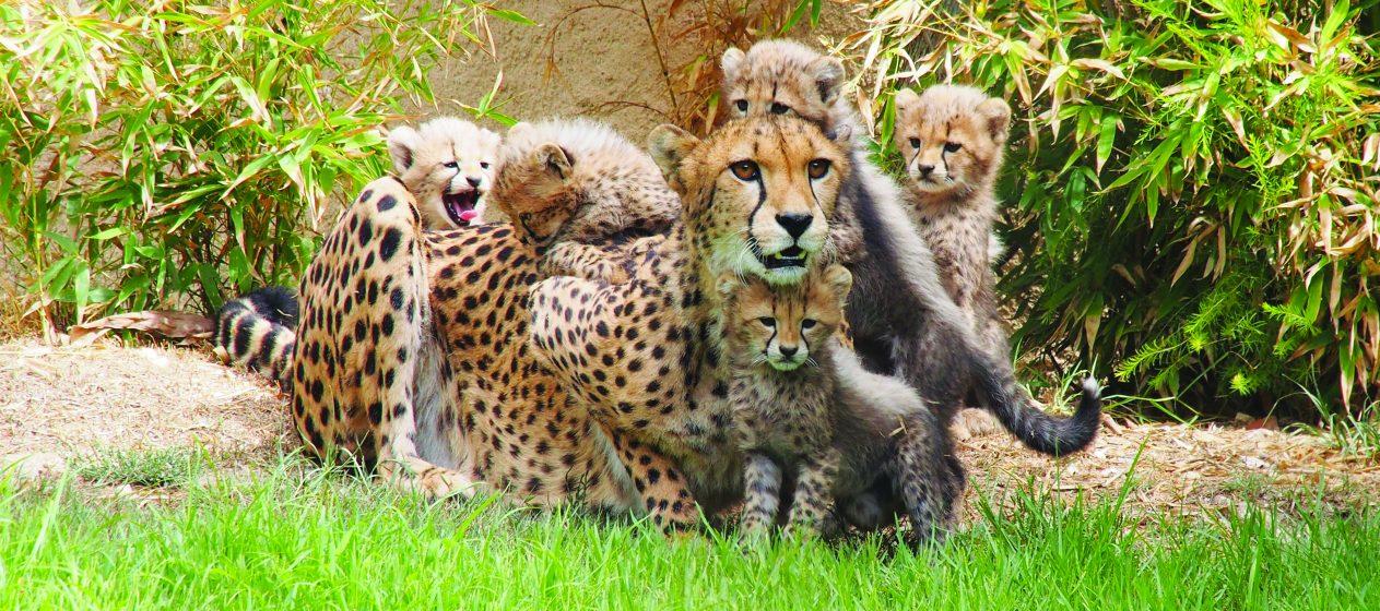 Kết quả hình ảnh cho Jardim Zoológico